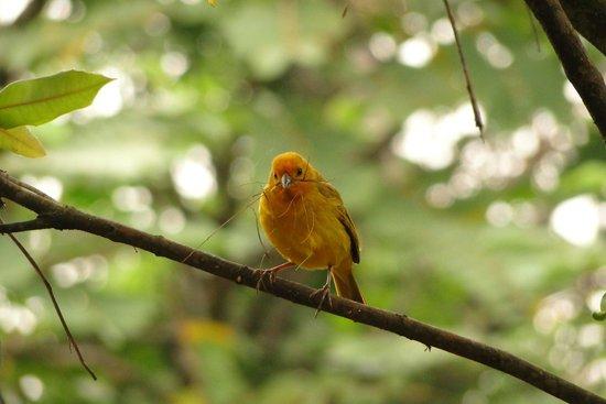 Cali, Colombia: Avistamiento de aves
