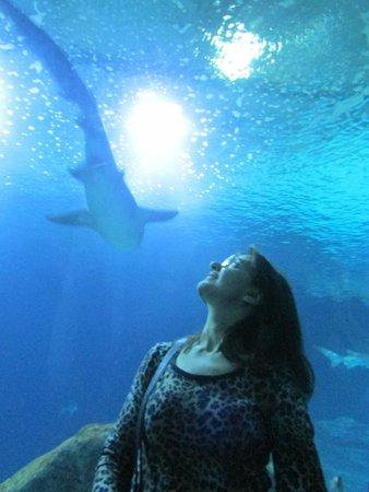 Valenciaflats Ciudad de las Ciencias: acuario