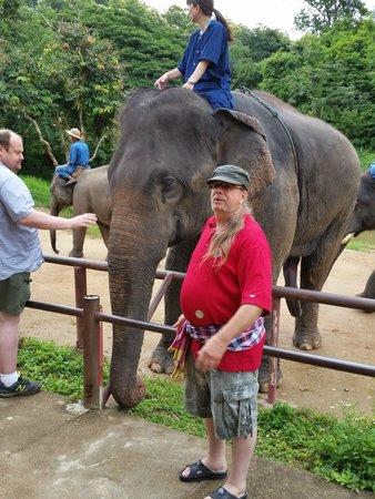 Thai Elephant Conservation Center: Me and elephant