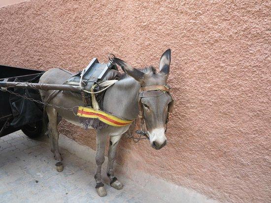 Riad Noir d'Ivoire: Cous Cous, the hotels donkey