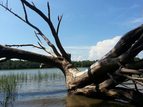 Skidaway Island State Park : Beautiful tree roots