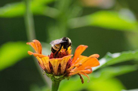 Parc Piedmont : Bee