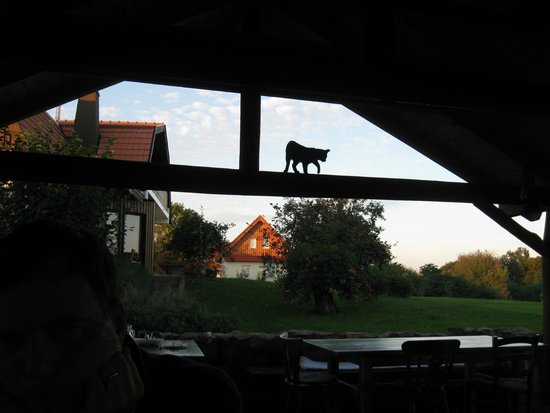 Pension Kezele : The staff is friendly. So are the pets.