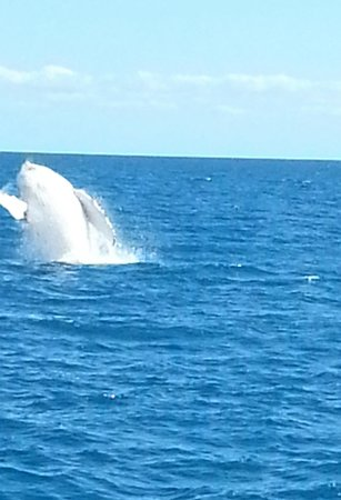 Freedom Whale Watch: Whale