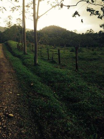 Chachagua Rainforest Eco Lodge: The beautiful grounds