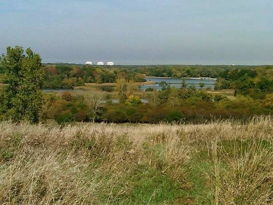 Busse Woods Trail System: atop the hill off the trail on the south-west side