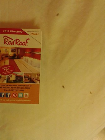 Red Roof PLUS+ Wilmington: Bloodstains on the sheets