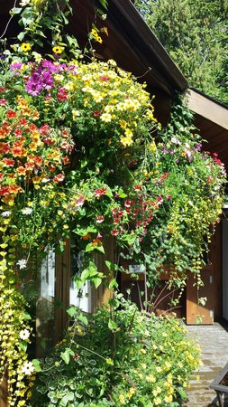 Crystal Cove Beach Resort: The BIGGEST hanging baskets!