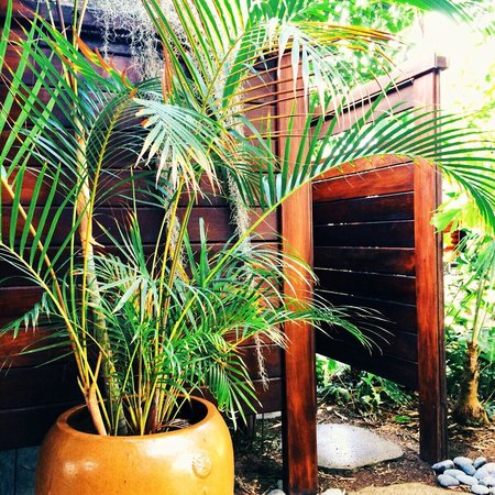 The Palmwood: East Room outdoor shower