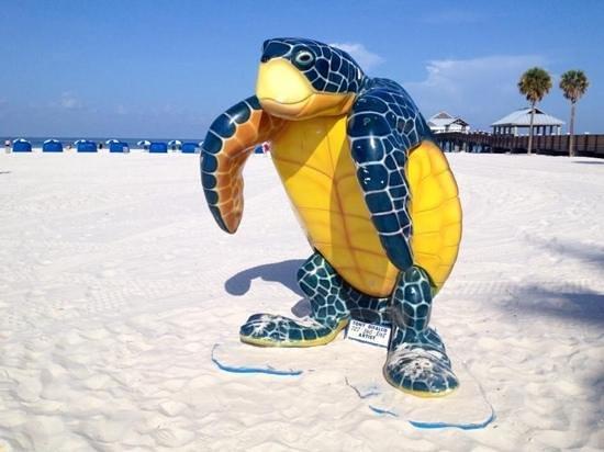Pier 60: Turtles, turtles everywhere!