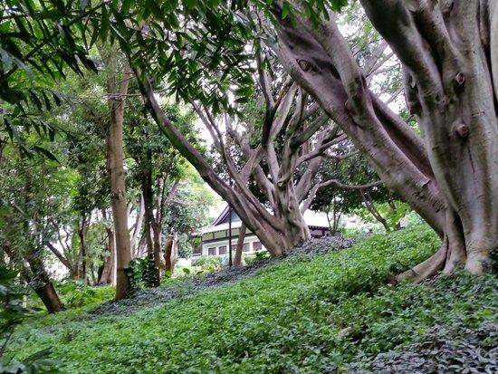 camino real sumiya lindos rboles y jardines