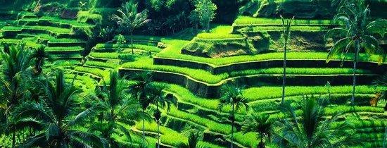 Ananta Auto Bali - Day Tours