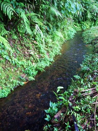 Bali Mountain Retreat : Rice field trek - gorgeous stream