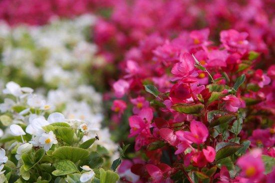 Flores de Plaza Moyua en Agosto
