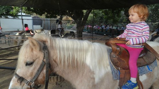 Griffith Park: Littel child on hors