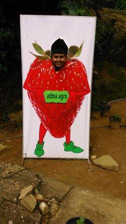Adma Agro fresh strawberry foods, Nuwara Eliya, Sri Lanka: Back garden