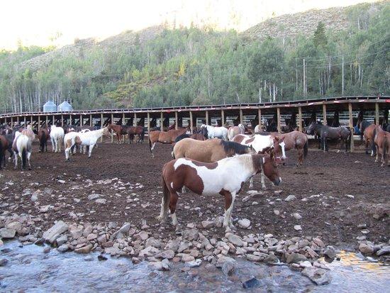 Drowsy Water Ranch: どの馬も美しく手入れされている。