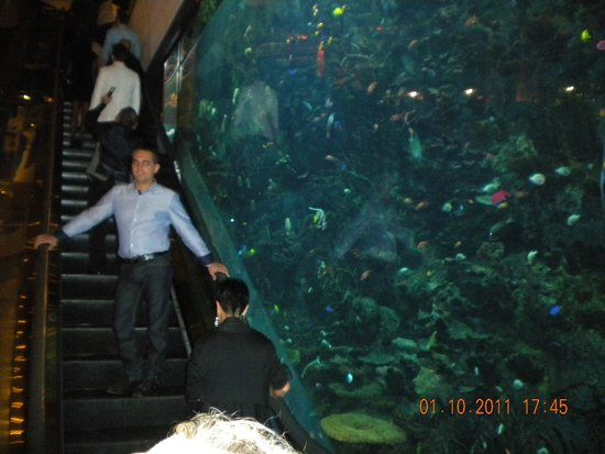 Burj Al Arab Jumeirah: acquario