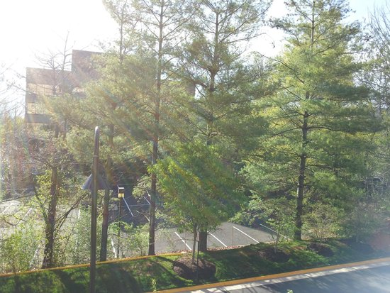 Westin Reston Heights: Sun rays through the pine trees. Blissful after a rough night