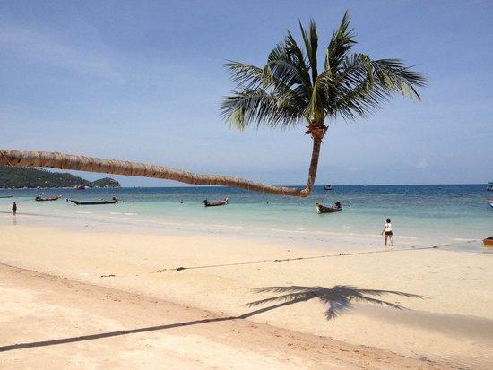 Koh Tao Simple Life Resort : Spiaggia da sogno ☀️☀️