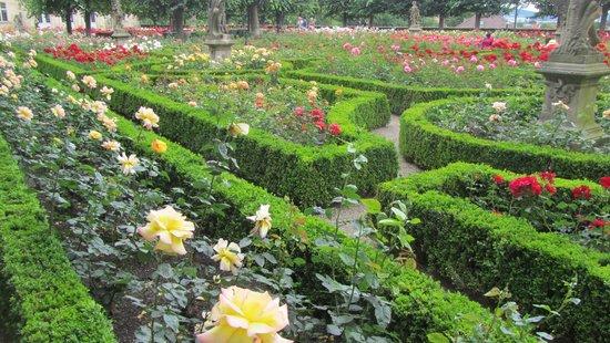 Bamberg Altstadt : 玫瑰園裡花朵競相爭豔