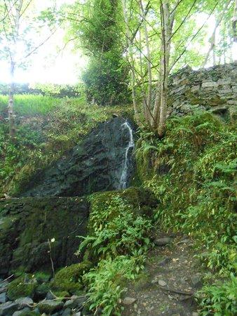 Connemara National Park : Ellis Wood Nature Trail
