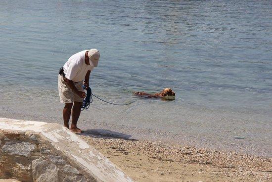 Наксос, Греция: Spaniel taking a chilling swim