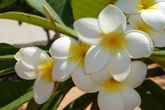 Flower from Santa Rosa