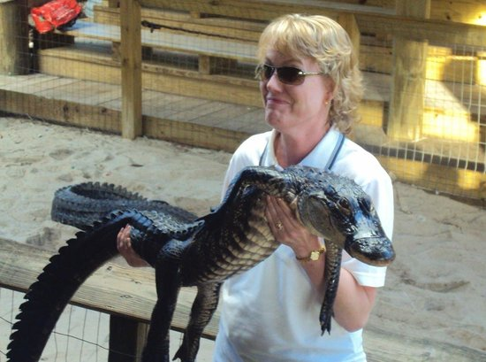 Gator Park: My fearful wife asked to hold an alligator.