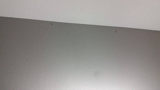 Hampton Inn & Suites Albany at Albany Mall : roaches in rooms, hallways, and ice machine area