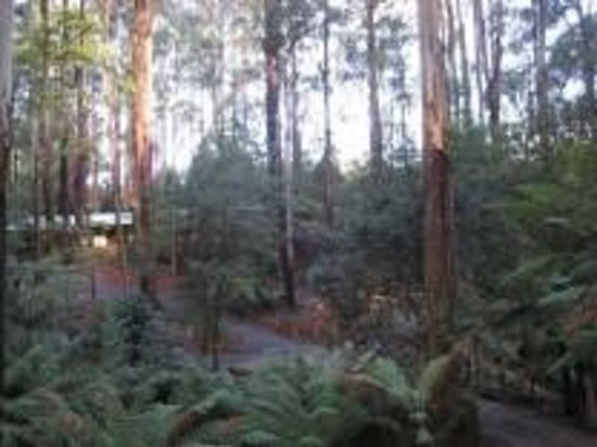 Fernglen Forest Retreat: Our Forest