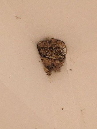 Harriet Apartments : Wasp nest