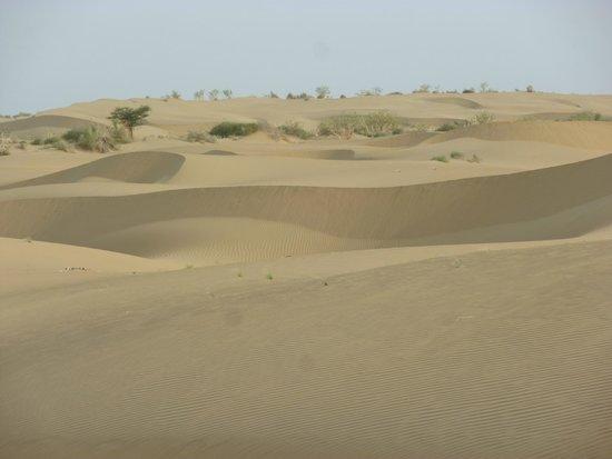 The Real Deal Rajasthan Camel Safari: Die schönen Sanddünen