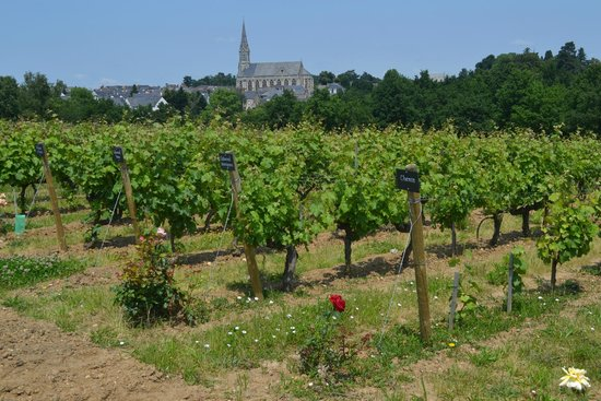 The Vine and Wine Museum of Anjou-Saumur