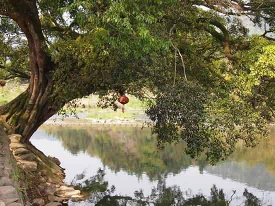 Ta'xia Village : 川沿いにかかる大木