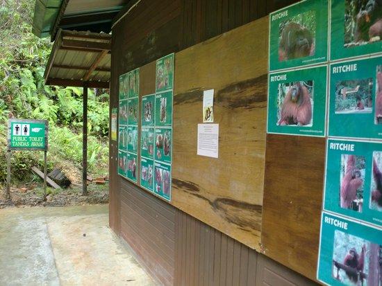 Semenggoh Nature Reserve: セメンゴ ワイルドライフ リハビリテーション センター