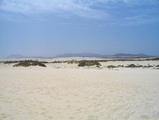 Las Marismas de Corralejo: Sand dunes opposite beach