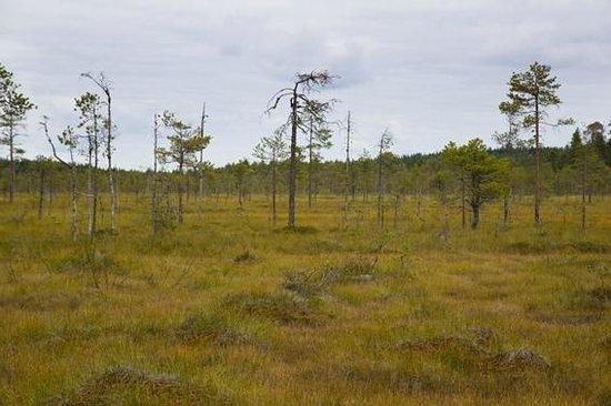 Saarijarvi, Finland: Swamp