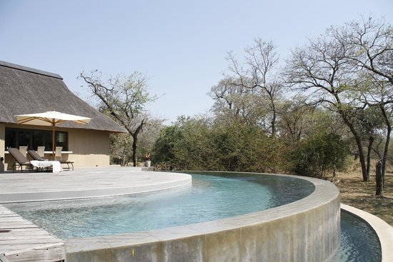 Thornybush Game Lodge: Pool