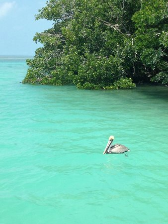 Easy Day Charters: pelican
