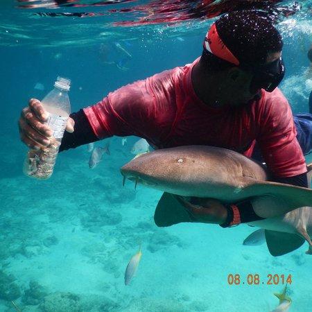 Oasis Divers: Shark feeding