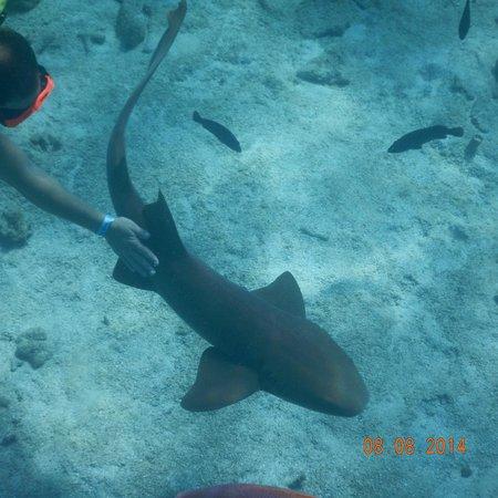 Oasis Divers: Shark petting