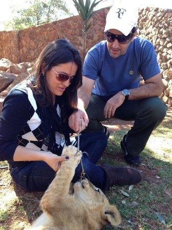 Ukutula Lion Park: Brincando com os leões