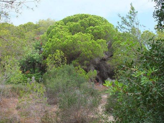 Parque Natural de la Albufera: on the way to el saler