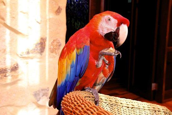 Nayara Resort Spa & Gardens: Silly bird!