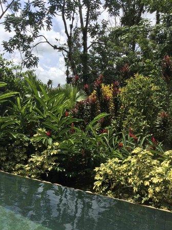 Nayara Resort Spa & Gardens: View of the volcano from the hotel