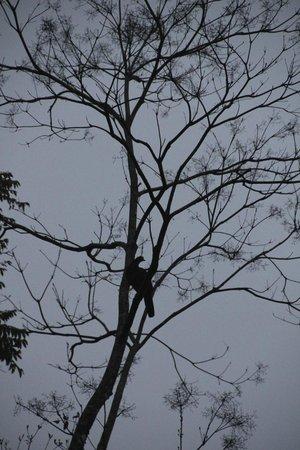 Nayara Hotel, Spa & Gardens: Turkey vulture sleeping in a tree outside our room