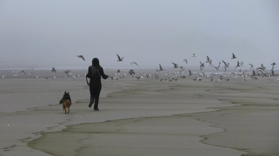 Long Beach: Just Us and the Gulls