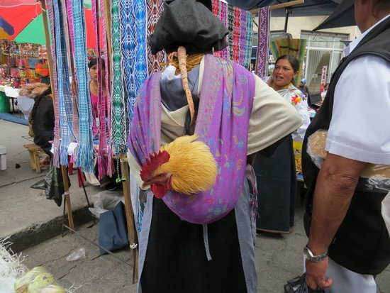 Otavalo, Ecuador: You see all kinds of things at Market