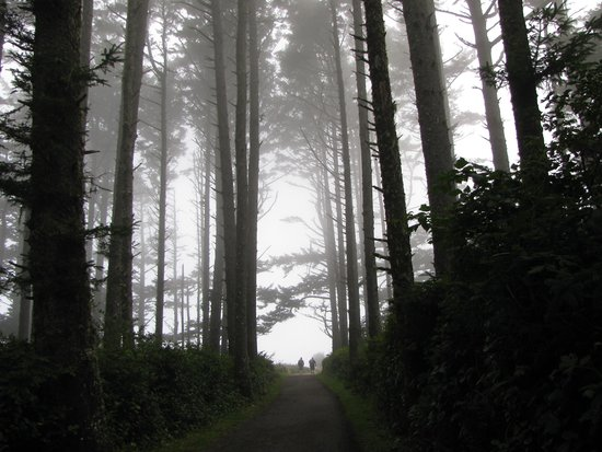 Cape Disappointment State Park: Fog in the Trees